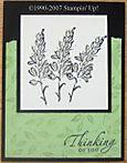 Celery_lupines